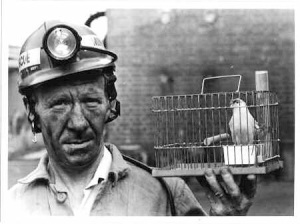 canarie in a cage coalmining