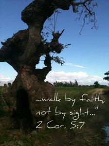 Haiti_Walk by Faith